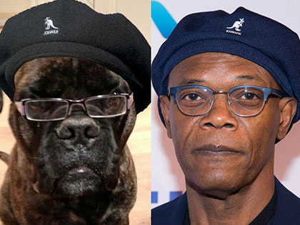 20 Animals Look Exactly Like Celebrities