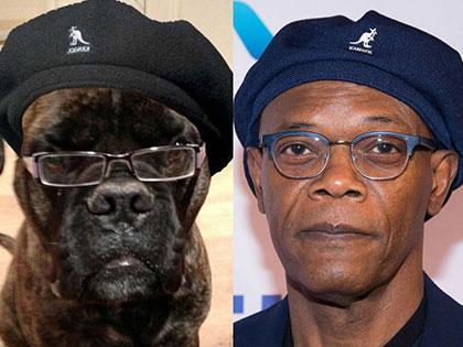20 Animals Look Exactly Like Celebrities
