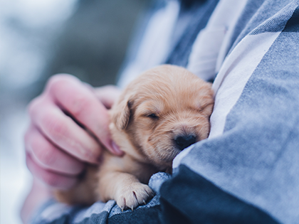 7 Surprising Reasons Why You Should Sleep With Your Dog