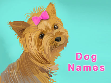 80+ Unique Dog Names That Makes Picking Your Dog's Name A Piece Of Cake
