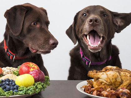 Did You Know That An All-Meat Diet Can Be Harmful To Your Dog?