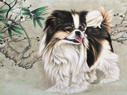 Fascinating Stories of 12 Uncommon Chinese Dog Breeds