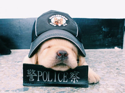 K-9 Unit Pups: Before They Become The Coolest, They Are The Cutest