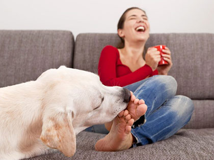 Licks of Love? Vet Explains Why Your Dog Licks Your Feet