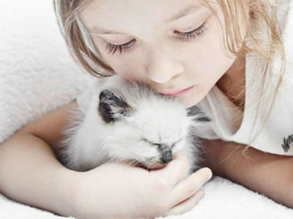 These Top 5 Docile Cat Breeds Could Be Best Friends With Your Kids