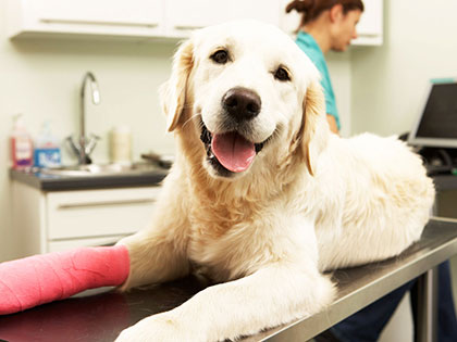 Tired Of Expensive Vet Bills? Pet Insurance Helps You Pay Less!