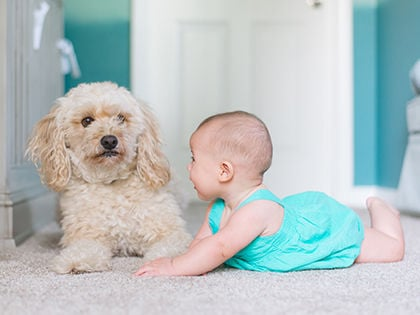 Top 10 Kid-Friendly Dog Breeds That Can Make The Perfect Babysitter
