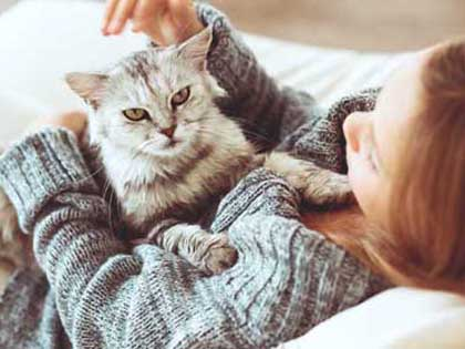 Top Five Cat Breeds For Apartment Dwellers And The Precautions