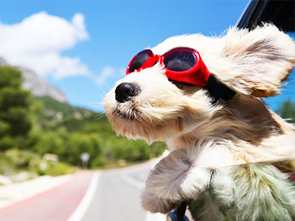 Travelling Without Your Dogs? Find The Best Dog Boarding Nearby In One Click
