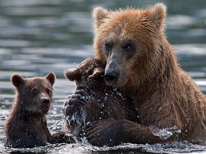 Two Bear Cubs Left To Drown By Their Mother Are Miraculously Saved By Unexpected Rescuers