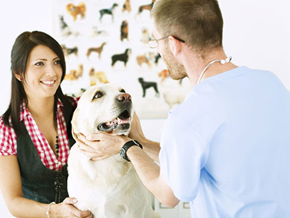Which Pet Insurance Company To Choose? Find The Best One In No Time